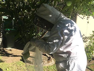 Bee Capture