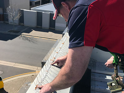 Commercial Bird Proofing Spikes