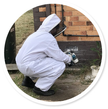 Bee Removal Adelaide
