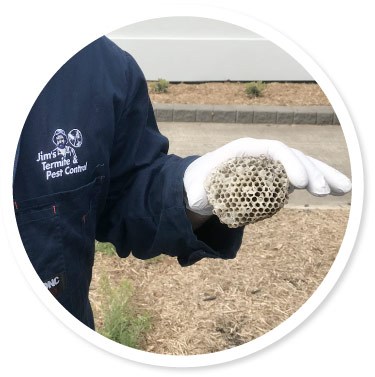 wasp nest removal Adelaide