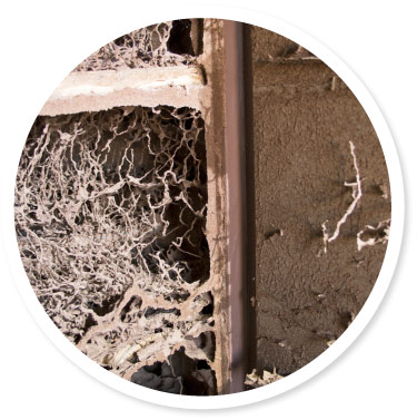 How much does termite treatment cost