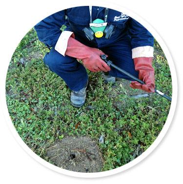 Carpenter Ants Pest Control
