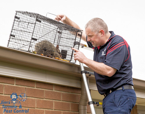 how-to-get-rid-of-possums-in-my-roof