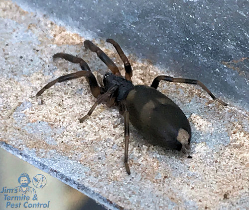 how-to-get-rid-of-white-tail-spiders