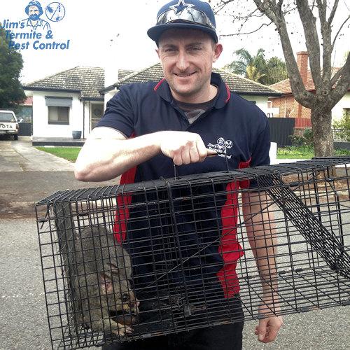 possum-removal-cost